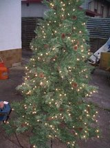4.5-7.5ft  --XMas Trees- in Ramstein, Germany