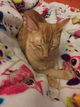 Sweet Young Male Cat in Fort Polk, Louisiana