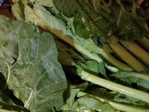 Turnip greens, cabbage, Collard greens in Fort Campbell, Kentucky