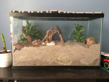 Hermit crabs plus tank/accessories in Fort Campbell, Kentucky