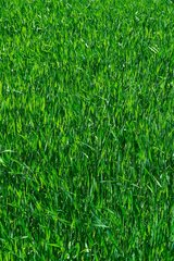 Does your lawn need some TLC? Let us help you get that BEAUTIFUL green grass you've always wanted! in Spring, Texas