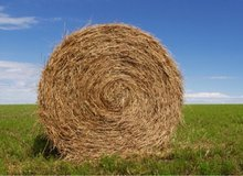 Horse hay, in Fort Campbell, Kentucky