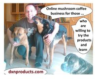 Who can be successful in DXN mushroom coffee business? in Los Angeles, California