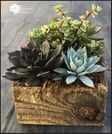 Succulents in Reclaimed Wood Planter Square in Oceanside, California
