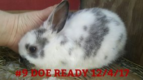 All Kinds Of Rabbits and Bunnies in Fort Campbell, Kentucky