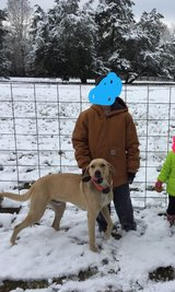 Butter. male Black Mouth Cur in Fort Polk, Louisiana