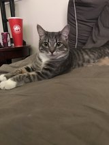 Cat needs a new home asap in Oceanside, California
