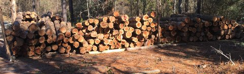 """Cedar Posts for sale 6-8"""" tops by 8ft in Livingston, Texas"""