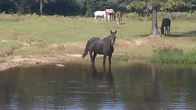Have two Mares for sale in Fort Polk, Louisiana