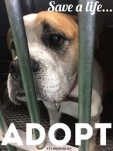 Save a Life - Adopt!!!  Don't shop! in Okinawa, Japan
