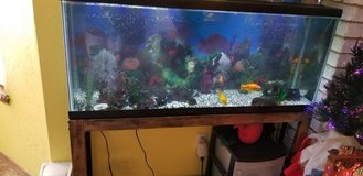 Large fish tank with fish. in Lawton, Oklahoma