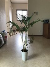 House Plant in Okinawa, Japan