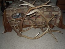 Antler pot / plant holder in Alamogordo, New Mexico