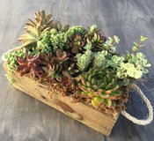 Mixed Succulents in Reclaimed Wood Planter! in Camp Pendleton, California