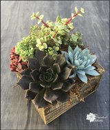 Mixed Succulents in Reclaimed Wood Square Planter! in Camp Pendleton, California