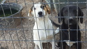 Good pups need forever home. in Fort Leonard Wood, Missouri