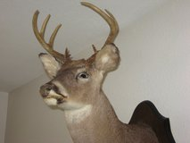 Mounted Whitetail Deer Head in Conroe, Texas