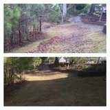 Tree and brush removal in Camp Lejeune, North Carolina