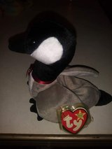 Ty Beanie Babies: Loosy the Goose in Fairchild AFB, Washington
