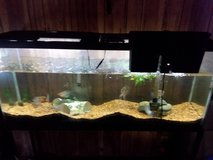 55 gallon fish tank with steel stand and fish in Hinesville, Georgia