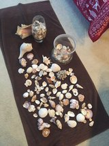 100's Of seashells in DeRidder, Louisiana