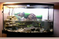 huge curved front fishtank 46 Gallon with stand and storage in Fort Leonard Wood, Missouri