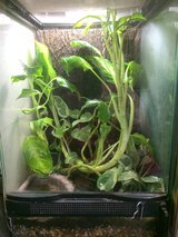 12x12x18 Zoo med setup with green tree frog in Barstow, California