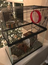 2 x 1 year old gerbils with all accessories in Kingwood, Texas