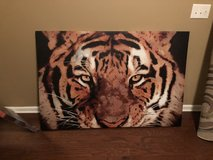Tiger canvas in Fort Bragg, North Carolina