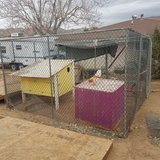 Chain link kennel in Yucca Valley, California