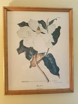 Magnolia print. Number 33 by Christoph Jacob Tree in Spring, Texas