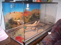 Terrarium with 2bearded Dragons--RED. in Ramstein, Germany