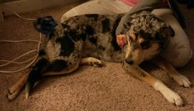 female 1yr old in Fort Campbell, Kentucky
