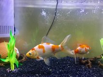 15 gallon fish tank w/ fish includes everything in Okinawa, Japan