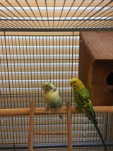 parakeets and cage in Kingwood, Texas