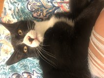 2 kittens Need Homes Today in Cherry Point, North Carolina
