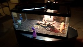 REPTILE AQUARIUM FOR SALE in Quad Cities, Iowa