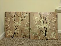 Gold Canvas Blooms in Fort Campbell, Kentucky