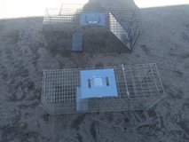 Humane animal traps in Yucca Valley, California