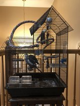 Two Cockatiels with cage /accessories in Joliet, Illinois