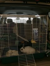 Bunny with Cage in Fort Lewis, Washington