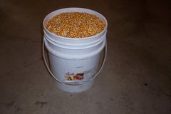 5 GALLON BUCKETS OF FEED CORN in Lockport, Illinois