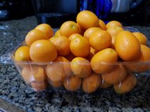 Sweet and Sour Kumquats 1.9 lbs in Hinesville, Georgia