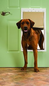 PetSafe Plastic Pet Door with Soft Tinted Flap - X-Large in Plainfield, Illinois