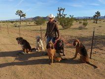 Dog Training: Basic to Advanced Obedience, Agility, Swimming and more! in 29 Palms, California