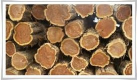 cedar logs in Fort Leonard Wood, Missouri