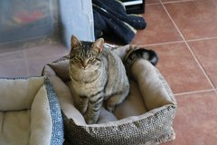 3 Beautiful Cats Looking For a Caring Forever Home in Camp Lejeune, North Carolina
