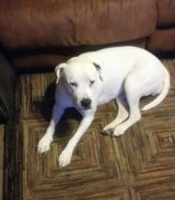 Lost Dog  Please Help! in Perry, Georgia