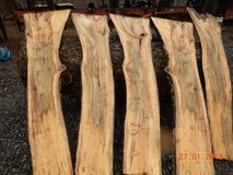 Spalted ambrosia  maple slabs in Cadiz, Kentucky