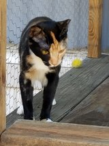9 month female cat in Conroe, Texas